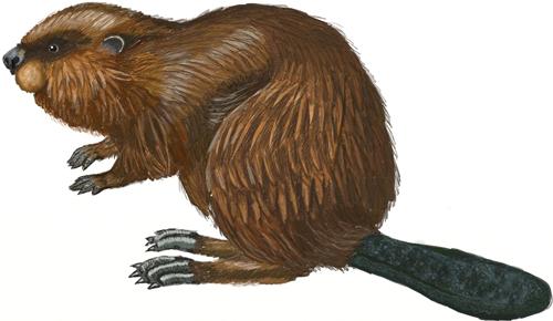 Beavercreek Bulletin