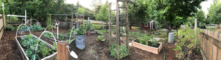 holly garden.jpg